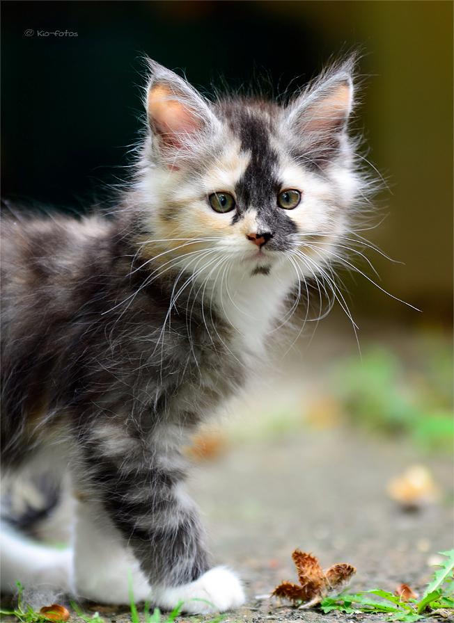 помогает маленькие кошачьи картинки офисы представительства имеются